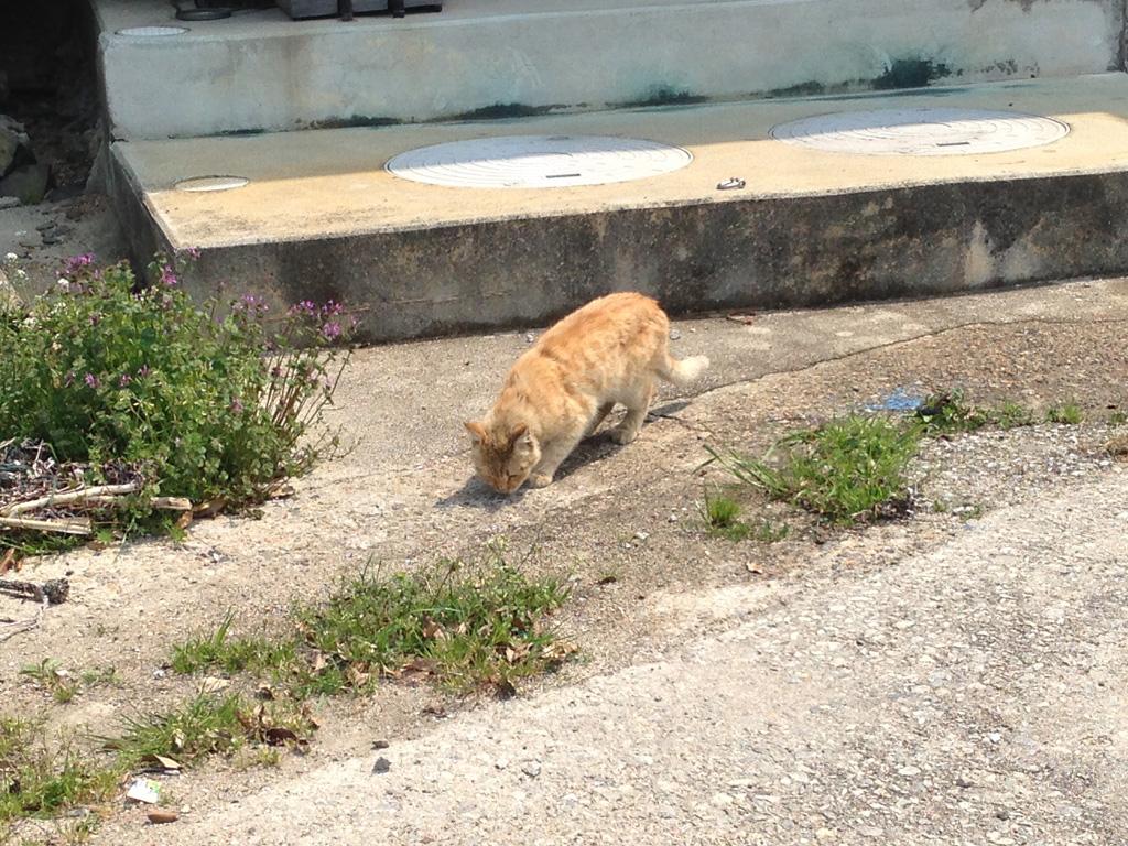 女木島の猫2