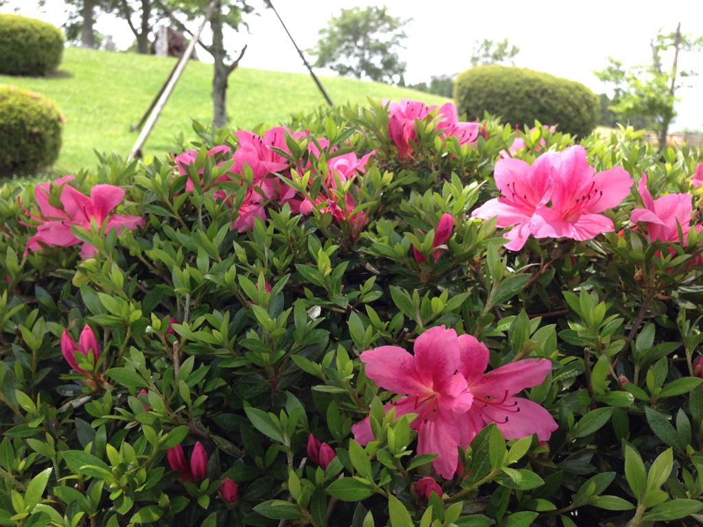 牧場内の花2